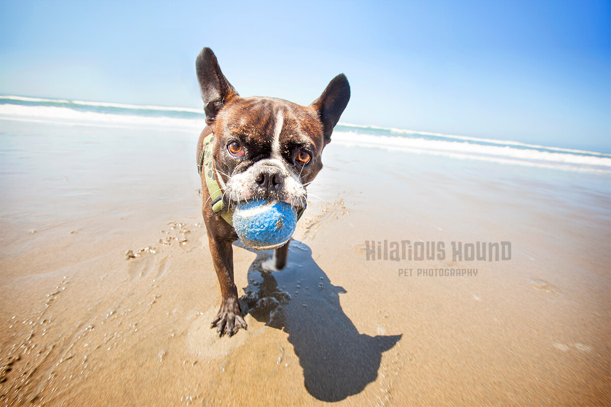 San Francisco's Best Locations for Pet Photography - Hilarious Hound