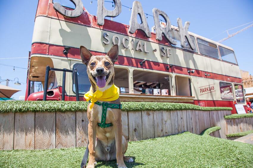 Pet Cube Hosts San Francisco's Largest Dog Block Party