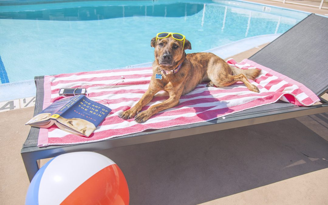 Can dogs get a sunburn?