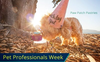 Paw Patch Pastries makes your pups Barkday special!