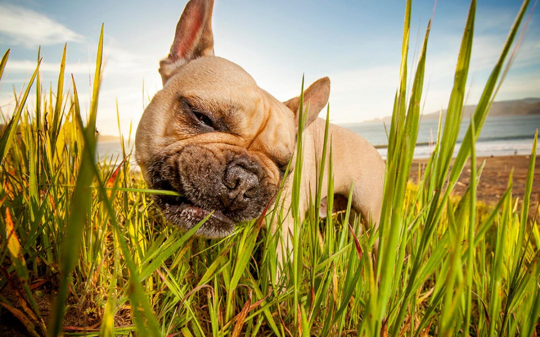 5 Reasons to Hire A Professional Pet Photographer