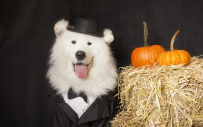 Is your pup ready to party? – 10 Great Dog Costumes