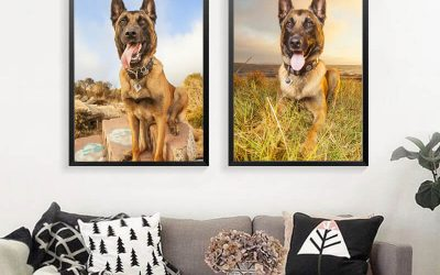 Your Guide to Hiring the Right Pet Photographer
