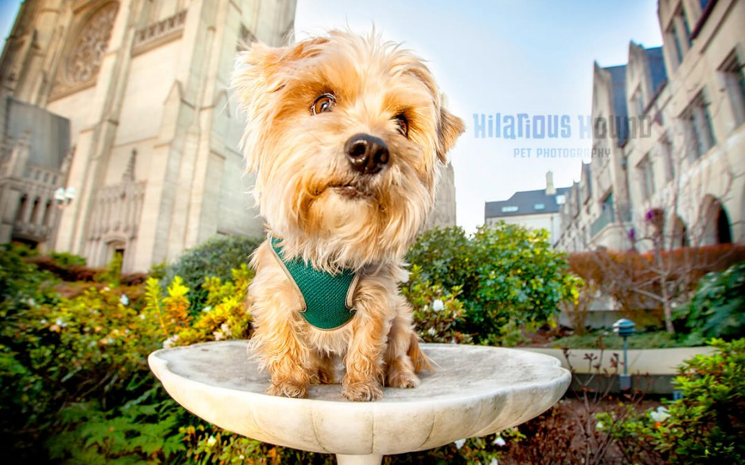 The Common Hesitation Every Dog Mom Has When it Comes to Pet Photography