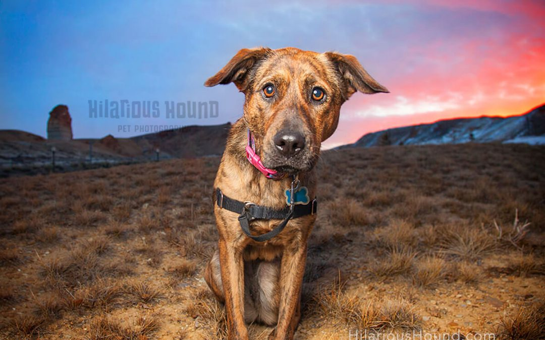San Francisco Pet Photography: Your Guide To Pet Photography and So Much More!