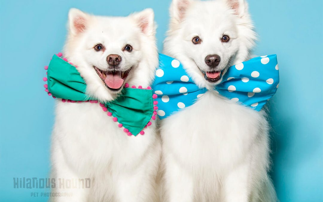 San Francisco's only dog-friendly Photo booth!
