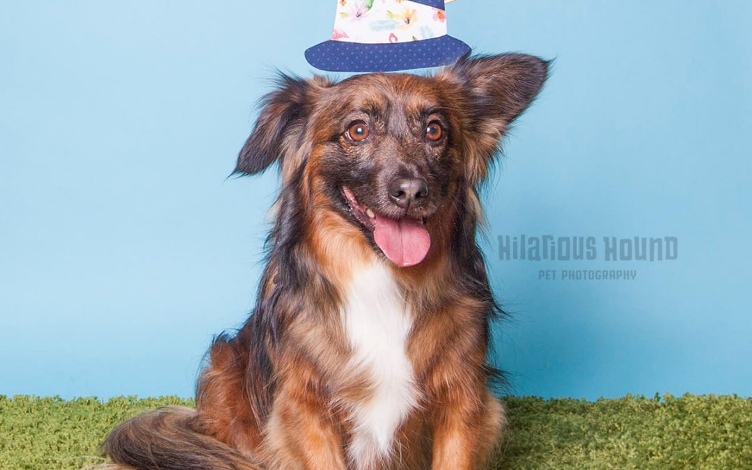 Dog Mom's Day: Stanford Pet Photography