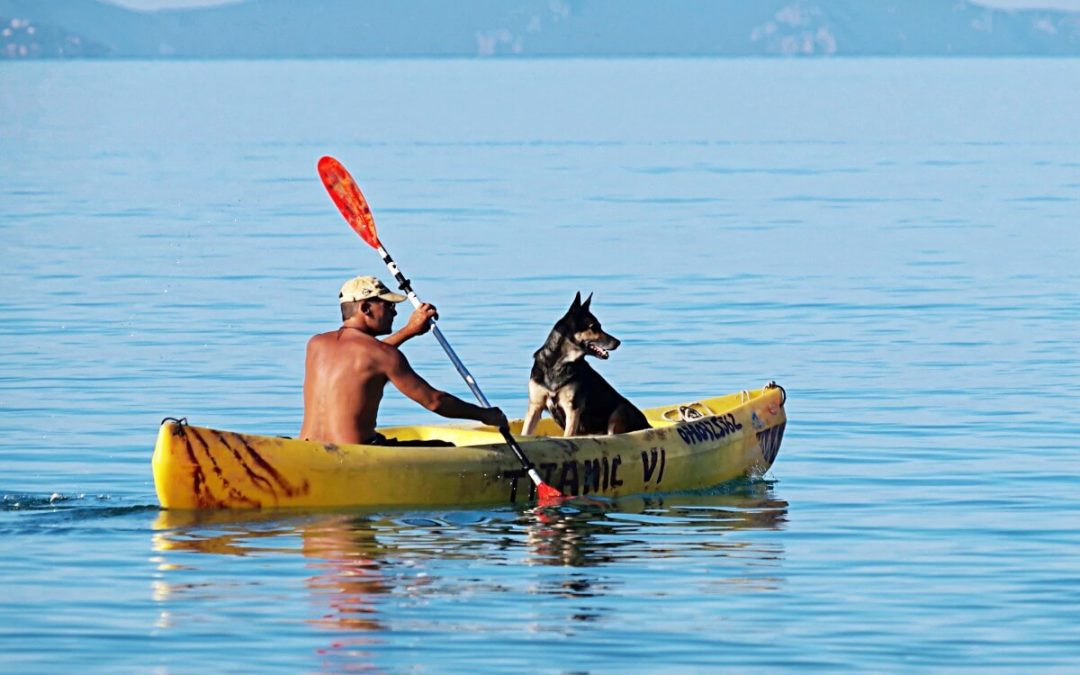 Keep Cool This Summer: 6 Bay Area Dog-Friendly Water Activities!