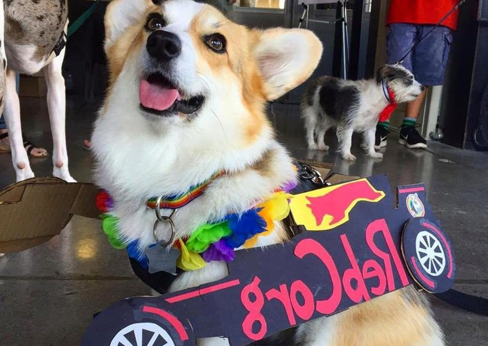 4 Bay Area Dog Events that aren't Corgi Con