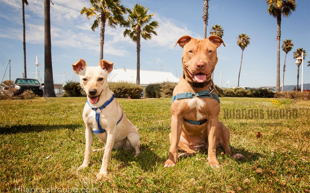 July's Feature Rescue Pups