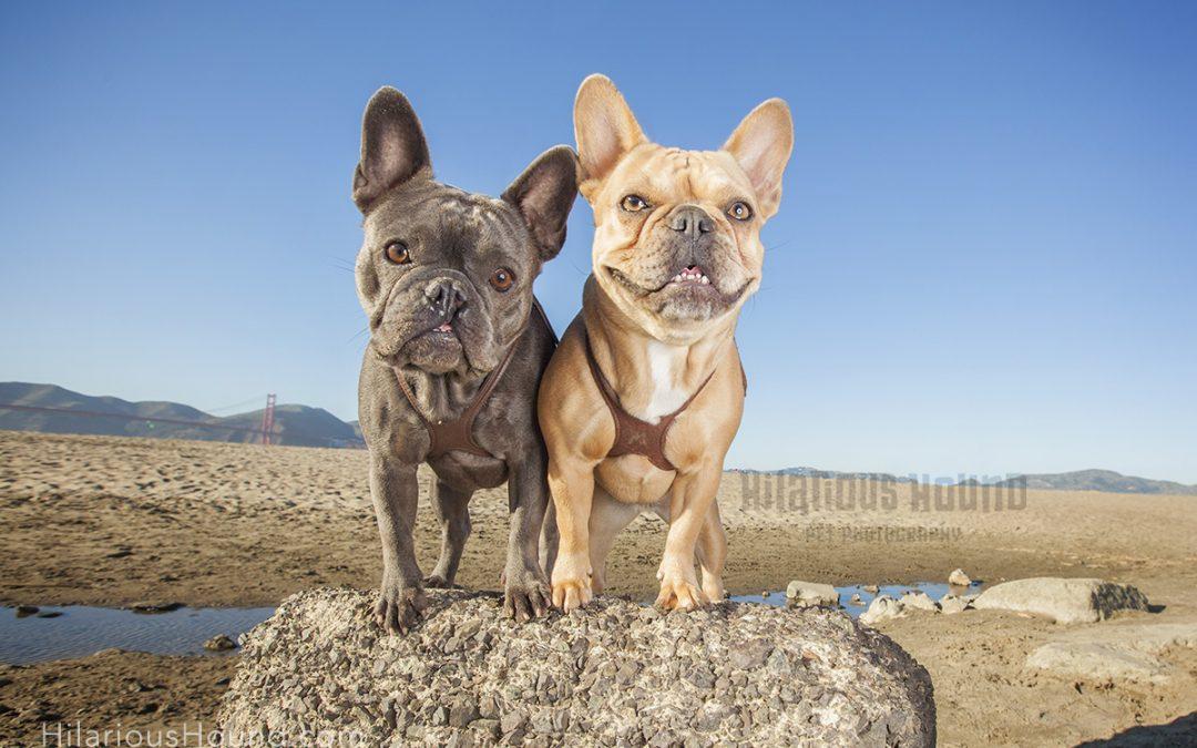 Pet Photography at Crissy Beach | Jazzy and Mya
