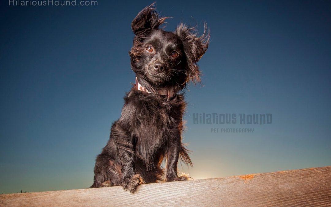 Sunset Pet Photography | Pepper