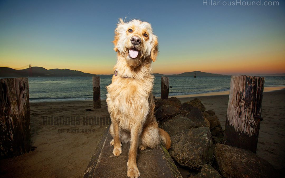 Pet Photography at Crissy Beach | Story