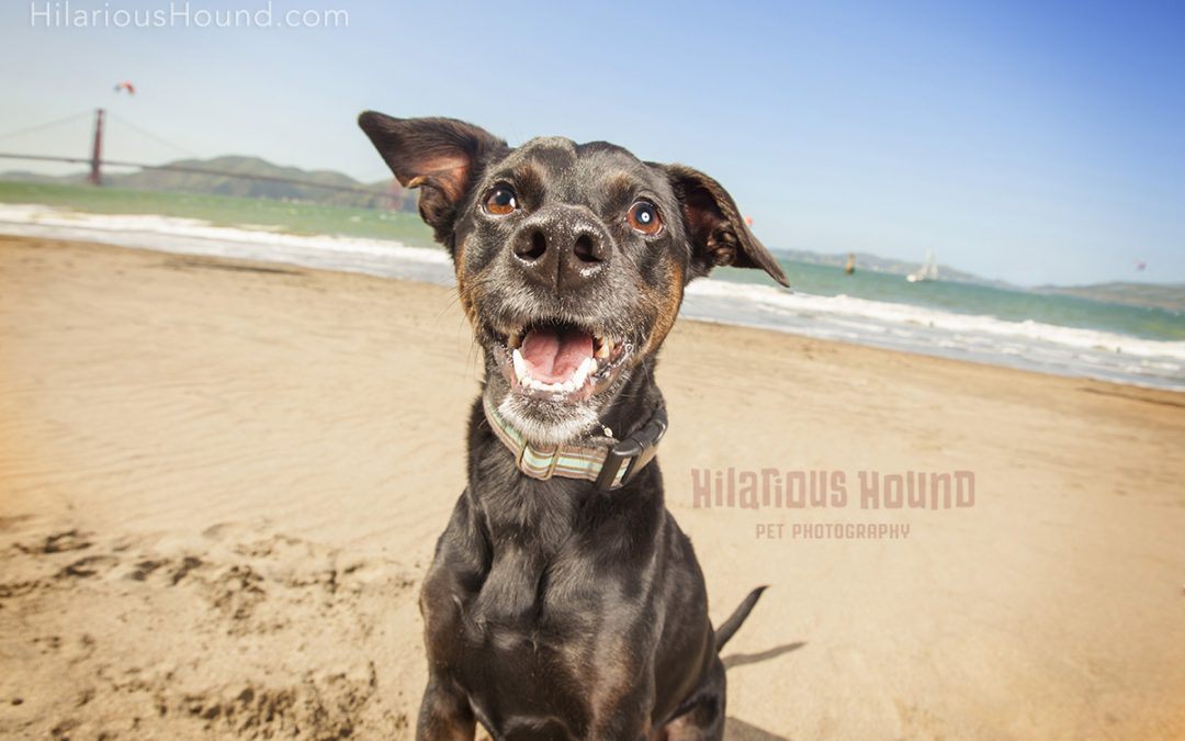 Golden Gate Pet Photography | Theo
